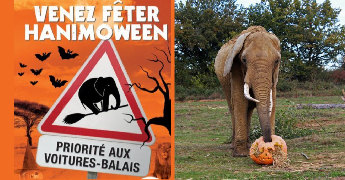 halloween 2019 a planete sauvage
